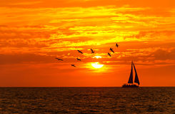 Uccelli della barca a vela di tramonto dell'oceano Fotografia Stock Libera da Diritti