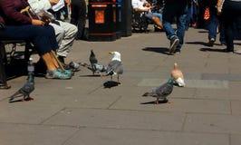 Uccelli della città Fotografia Stock