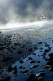 Uccelli della foschia di mattina Immagine Stock Libera da Diritti