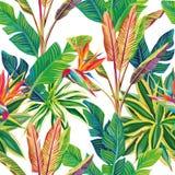 Uccelli della giungla del paradiso tropicali e foglie senza cuciture Fotografia Stock Libera da Diritti