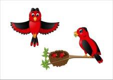 Uccelli della madre e di padre del fumetto che alimentano i pulcini nei nes Immagine Stock