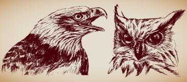 Uccelli della preda Immagine Stock