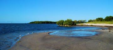 Uccelli della spiaggia Immagine Stock