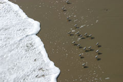 Uccelli della spiaggia Fotografia Stock Libera da Diritti