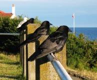 uccelli della spiaggia Fotografie Stock