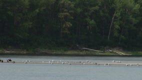 Uccelli della sponda del fiume archivi video