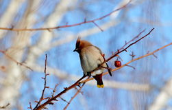 Uccelli delle steppe Fotografie Stock Libere da Diritti