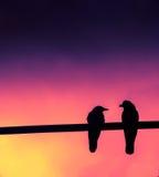 Uccelli di amore! Fotografia Stock Libera da Diritti