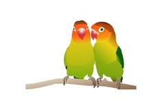 Uccelli di amore del pappagallo Fotografia Stock Libera da Diritti