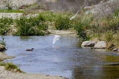 Uccelli di California del lago Fotografie Stock