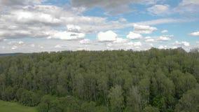 Uccelli di canto nella foresta archivi video