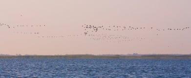 Uccelli di circonduzione Fotografia Stock Libera da Diritti