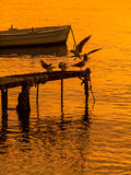 Uccelli di dancing e barca al tramonto Immagini Stock
