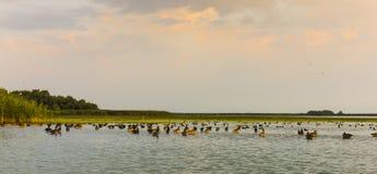 Uccelli di delta di Danubio Fotografia Stock Libera da Diritti