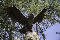 Uccelli di Eagle Wild nel parco Fotografia Stock