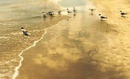 Uccelli di Galveston immagine stock libera da diritti