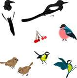 Uccelli di inverno Immagine Stock Libera da Diritti