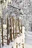 Uccelli di inverno Fotografie Stock