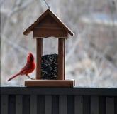 Uccelli di inverno Immagini Stock