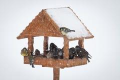 Fauna selvatica degli animali di inverno Immagini Stock Libere da Diritti