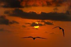 Uccelli di libertà che pilotano siluetta di speranza Fotografie Stock