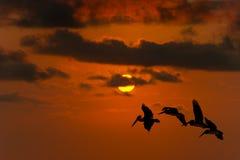 Uccelli di libertà che pilotano siluetta di speranza Fotografia Stock