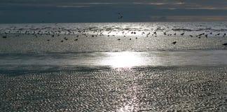 Uccelli di mare sulle sabbie argentee in afterno ritardato di inverni Immagini Stock