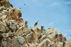 uccelli di riposo Immagini Stock Libere da Diritti
