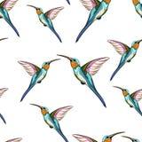 Uccelli di ronzio Modello senza cuciture dell'uccello tropicale esotico di ronzio Illustrazione disegnata a mano royalty illustrazione gratis