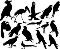 Uccelli di vettore Fotografia Stock Libera da Diritti