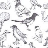 Uccelli di vettore di tiraggio della mano Fotografia Stock Libera da Diritti