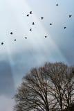 uccelli di volo Immagine Stock