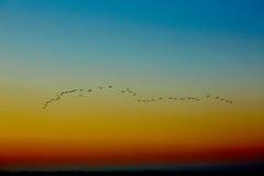 Uccelli di volo della siluetta Fotografia Stock Libera da Diritti