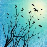 Uccelli di volo e filiali di albero su grunge indietro illuminato Immagini Stock