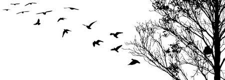 Uccelli di volo e siluette del ramo su fondo bianco Fotografie Stock Libere da Diritti