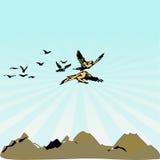Uccelli di volo liberi Immagini Stock