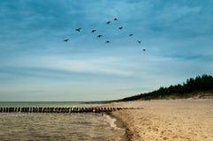 Uccelli di volo nel gruppo Fotografia Stock Libera da Diritti
