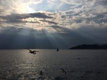 Uccelli di volo sopra il mare Fotografia Stock Libera da Diritti