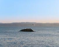 Uccelli di volo sulla vista dell'isola Fotografia Stock
