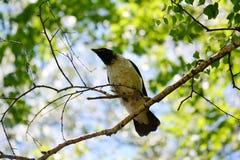 Uccelli differenti Altaya Fotografia Stock