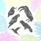 Uccelli disegnati a mano dell'inchiostro Fotografia Stock Libera da Diritti