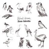 Uccelli disegnati a mano di schizzo Insieme in bianco e nero degli uccelli dello zoo royalty illustrazione gratis