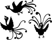 Uccelli divertenti Fotografia Stock