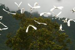 Uccelli durante il volo Immagine Stock