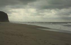 Uccelli durante il volo sopra il mare Fotografia Stock
