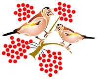 Uccelli e frutta Fotografia Stock Libera da Diritti