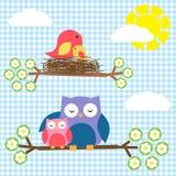 Uccelli e gufi Fotografia Stock