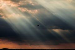 Uccelli e raggi di sole immagine stock