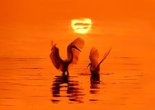 Uccelli e sole Fotografia Stock Libera da Diritti