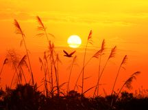 Uccelli e sole Fotografia Stock